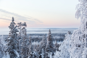 Snow covered Lapland