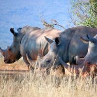 Rhino at Hluhluwe-Umfolozi Game Reserve