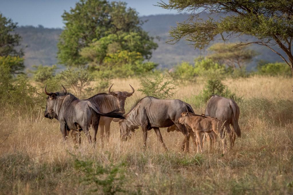 African wild animals in the wild