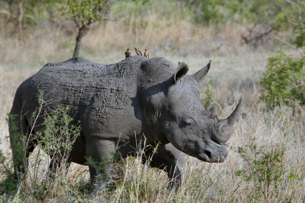 Rhino in a Game Reserve