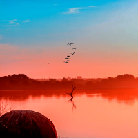 Birds flying off a branch sticking out of a river in Botswana