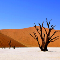 Baron tree in the desert
