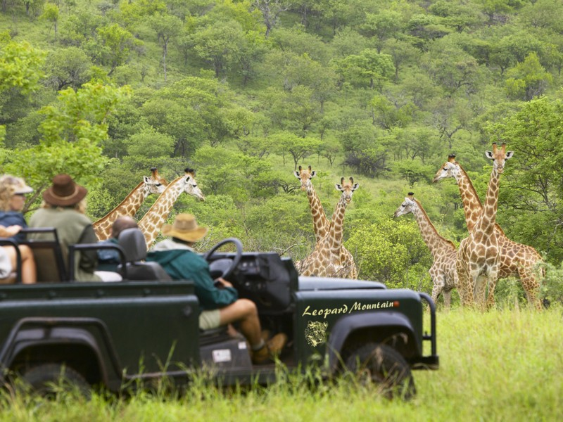 Safari vehicle with Giraffe in the distance